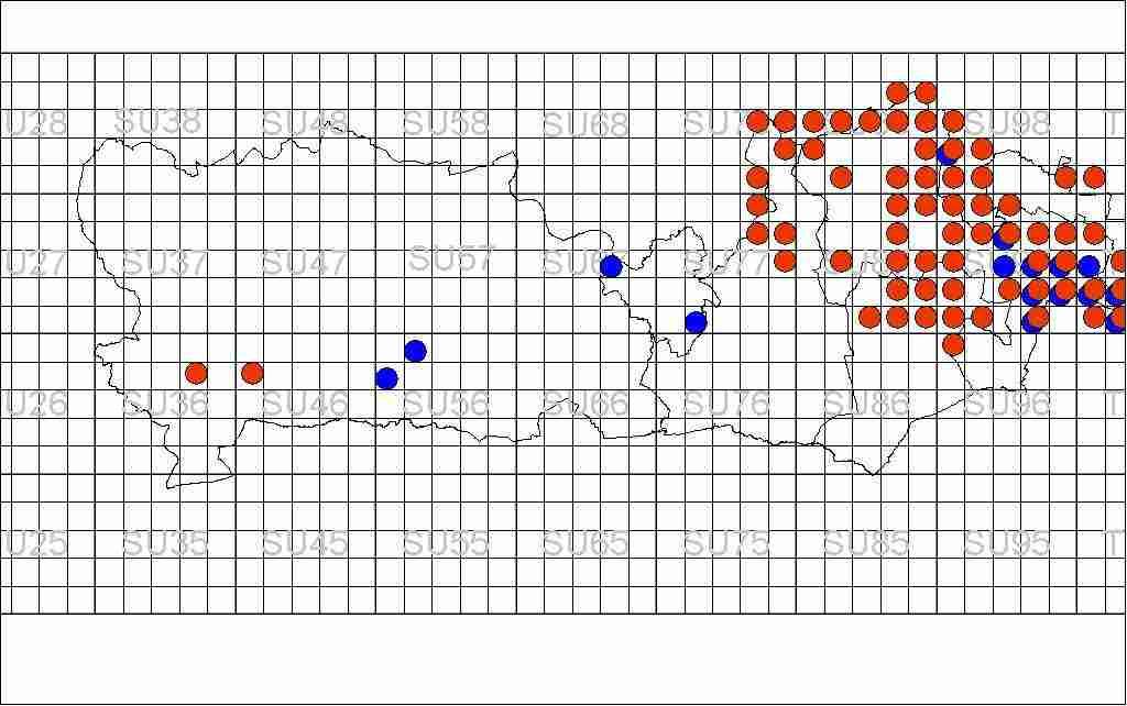 RNP Distribution